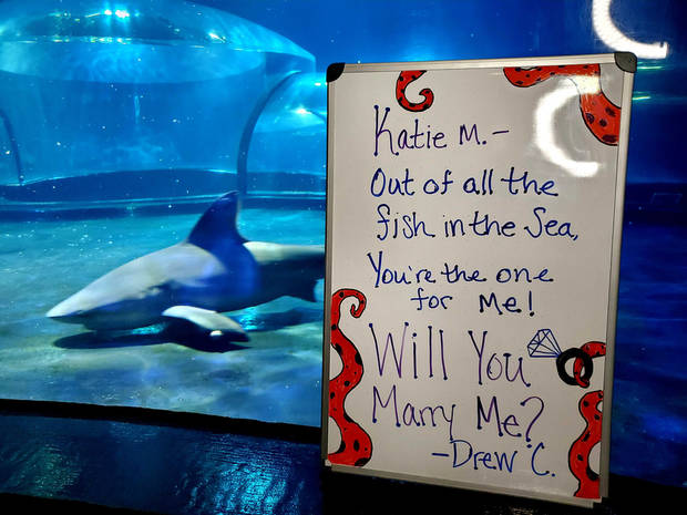 Workers at the Oklahoma Aquarium in Jenks helped a man propose to his girlfriend via live-stream. (Photo by Lissa Chidester/Oklahoma Aquarium)