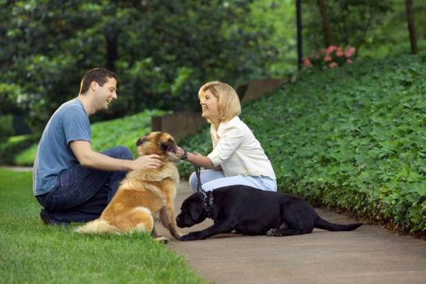 photo - A recent survey about what breeds are attractive to the opposite sex done by Klooff, a mobile application for pet lovers, revealed that if attracting a date is your goal, you can't go wrong with retrievers, popular breeds for both sexes.