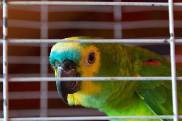 "When someone in a Florida neighborhood heard what sounded like a woman screaming for help, the person called 911. The voice was actually coming from a parrot saying, ""let me out!"" [Vergani_Fotografia, Getty Images/iStockphoto]"