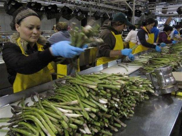 photo - In this April 18, 2012 photo, Maria Partida, left, sorts fresh asparagus at a Gourmet Trading Co. packing plant in Pasco, Wash.  U.S. asparagus growers are replanting fields following a decades-long downturn. (AP Photo/Shannon Dininny)