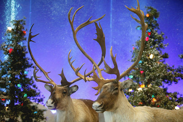 photo - Stuffed reindeer are in the Santa's Wonderland at Bass Pro Shops in Oklahoma City. Photo by SARAH PHIPPS, THE OKLAHOMAN