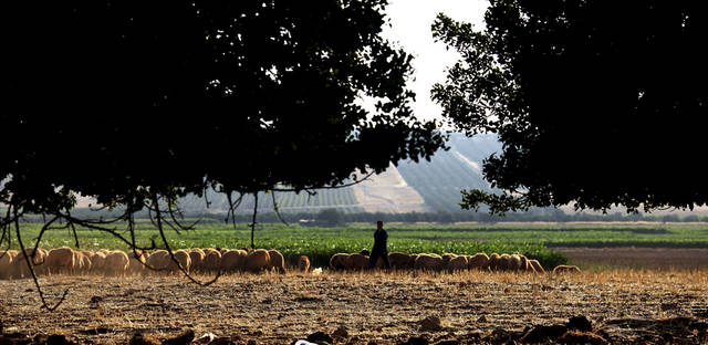 A Jordanian shepherd tends his flock Friday near the Syrian-Jordan border on the outskirts of Ramtha, Jordan, in Al-Torra village, which borders Daraa, Syria. The fields behind the shepherd are part of Syria. AP photo