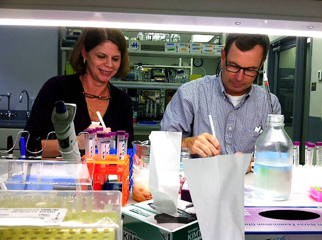 OMRF scientists  Caroline and Mike Kinter work side-by-side at the bench. They worked together on a new paper about how the immune system reacts with cholesterol to cause arteries to harden.  Photo provided. <strong></strong>