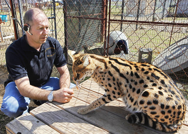 Martin Stucki, owner of A1 Savannahs in Ponca City, feeds a serval. Photo by David McDaniel, The Oklahoman