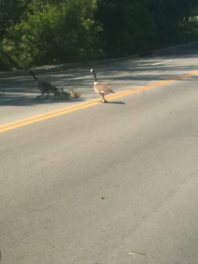 Cute little family crossing May near Memorial