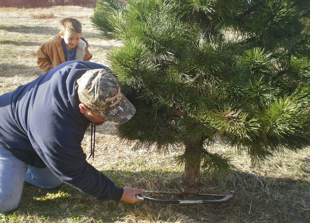 CHRISTMAS TREES / FAMILY: James Marler cuts down an Austrian pine at Martinbird Tree Farm while his son Chase Marler, 4, looks on with delight.