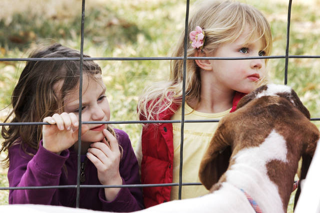 Allison Crowder, 6, and Emery Koenig, 5, view a goat up close during the Farm Festival at the Edmond History Society and Museum and Stephenson Park Saturday, March 3, 2012. Photo by Doug Hoke, The Oklahoman