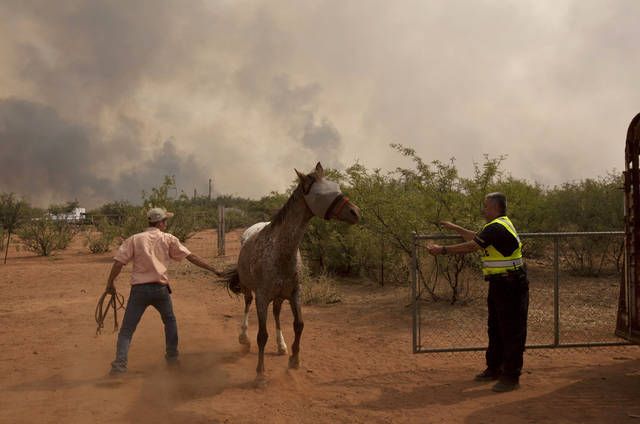 A Bisbee police officer helps Shawn Henkin load up a horse Thursday afternoon, June 16, 2011, in Hereford, Ariz. The neighborhood was under a mandatory evacuation as the Monument fire worked its way northeast. Henkin managed to load several horses but this mare pulled free and they were forced to evacuate without it. Authorities say the Monument fire has charred more than 9,300 acres or 14 square miles. (AP Photo/The Arizona Republic, Pat Shannahan) MARICOPA COUNTY OUT; MAGS OUT; NO SALES