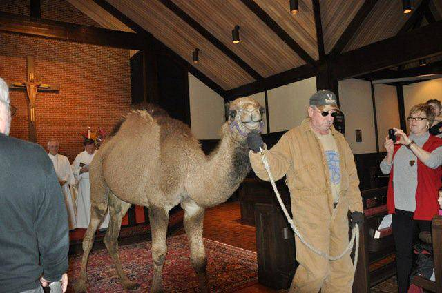 A camel is led through St. Augustine of Canterbury Episcopal Church, 14700 N May, as part of the church's 2011 Epiphany activities. Photo provided <strong></strong>