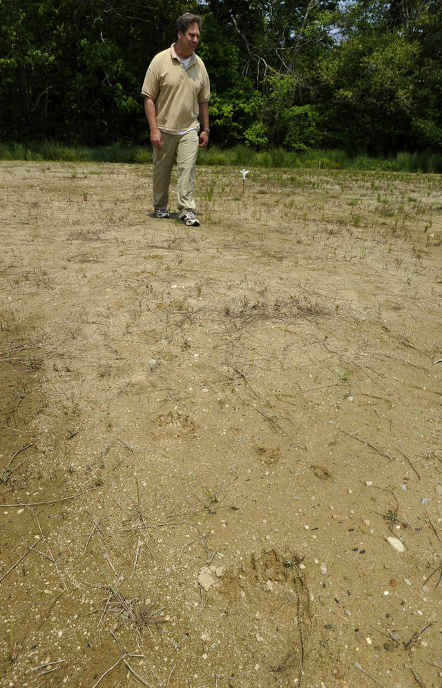 FILE - In this Thursday, May 31, 2012 file photo cranberry farmer David Ross walks near a black bear footprint in soft sand on his property in West Barnstable, Mass. Ross spotted the bear twice while working his bogs late Sunday. The 200-pound bear is capturing the imagination of Massachusetts residents as it meanders across Cape Cod after officials believe it swam over from the mainland. (AP Photo/Cape Cod Times, Steve Heaslip)