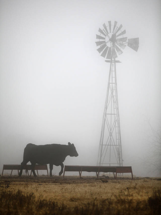 Fog covers a field near Air Depot and Covell in Edmond, Oklahoma January 15, 2010. Photo by Steve Gooch, The Oklahoman