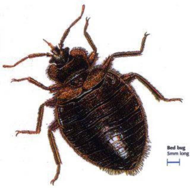 Bed bug photo provided. <strong></strong>