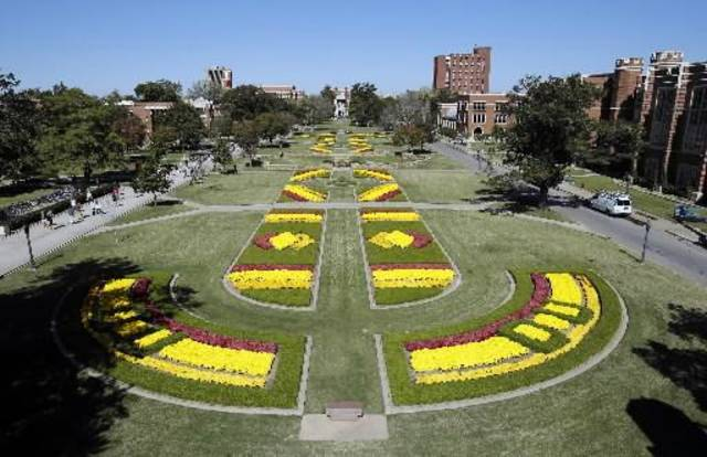 Chrysanthemums bloom on the South Oval on the campus of the University of Oklahoma ( OU) on Thursday, Oct. 18, 2012 in Norman, Okla. Photo by Steve Sisney, The Oklahoman
