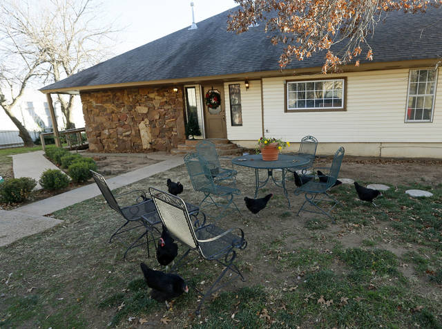 Chickens peck the ground around the backyard table and chairs at Green Acres, 7601 SW 74. <strong>NATE BILLINGS - The Oklahoman</strong>