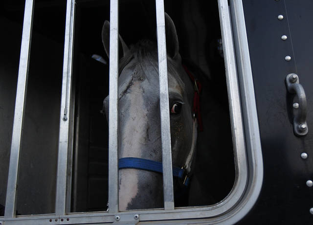 A horse looks out from a trailer after being loaded by workers at the Fair Grounds Race Course & Slots, after a mandatory evacuation of the animals was issued by the track, in preparation for Tropical Storm Isaac, which is expected to become a hurricane as it moves into the Gulf of Mexico, in New Orleans, Sunday, Aug. 26, 2012. (AP Photo/Gerald Herbert) ORG XMIT: LAGH104
