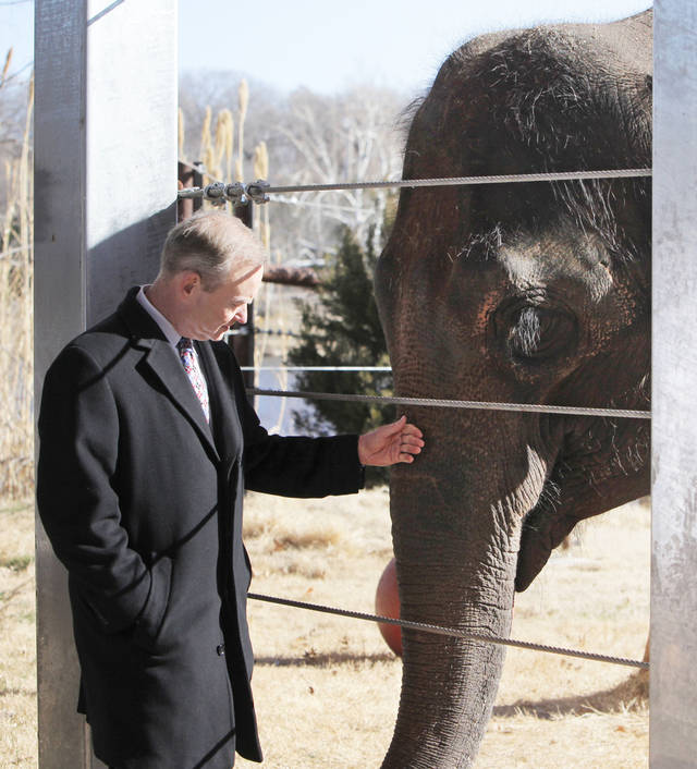 Mayor Mick Cornett pets Asha, an elephant at the Oklahoma City Zoo, before a news conference on Thursday. Photos by Nate Billings, The Oklahoman