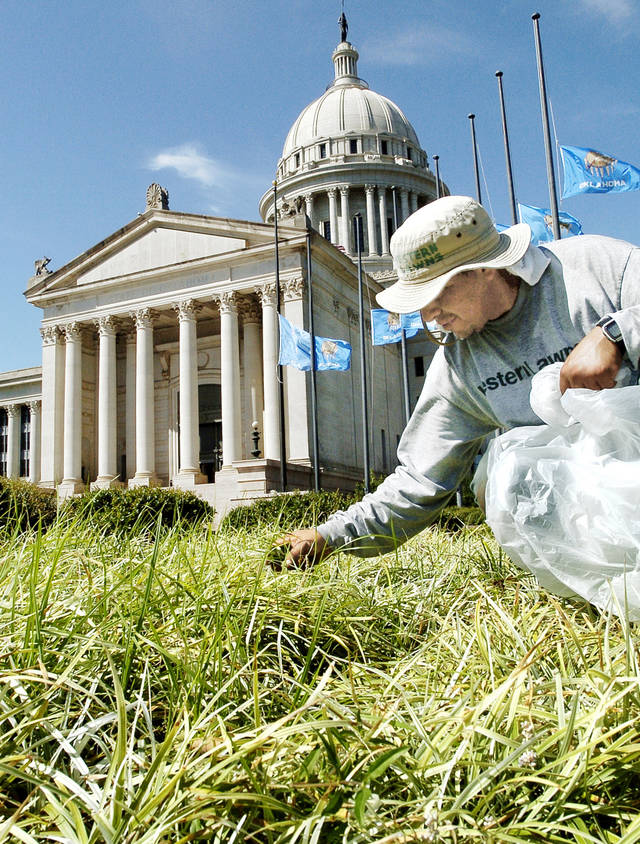 Jesus Montoya Pena pulls weeds out of ornamental grass in a flower bed on the South Plaza at the state Capitol.  photo by Jim Beckel, oklahoman archive