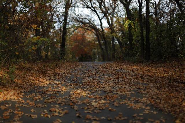 Fall leaves cover a path at Hafer Park in Edmond, Okla., Saturday, Nov. 10, 2012.  Photo by Garett Fisbeck, The Oklahoman