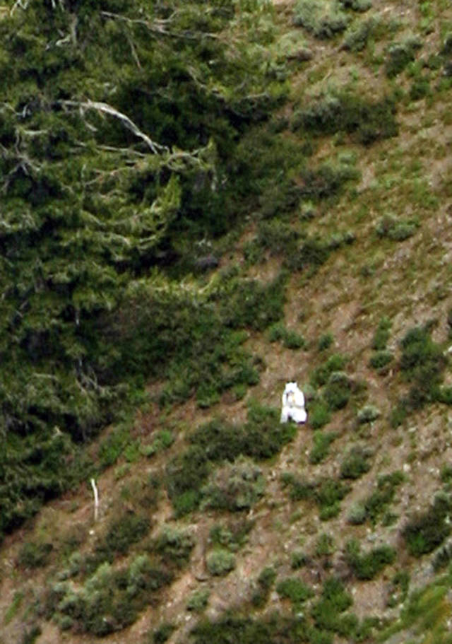 "<p>In this Sunday, July 15, 2012 photo, a person is seen in a goat suit in the Wasatch Mountains on Ben Lomond peak outside of Ogden, Utah. Wildlife officials are worried he could be in danger as goat hunting season approaches. Phil Douglass of the Utah Division of Wildlife Resources said Friday the person is doing nothing illegal, but he worries the so-called ""goat man"" is unaware of the dangers. ""My very first concern is the person doesn't understand the risks,"" Douglass said. ""Who's to say what could happen."" (AP Photo/Cody Creighton)</p>"