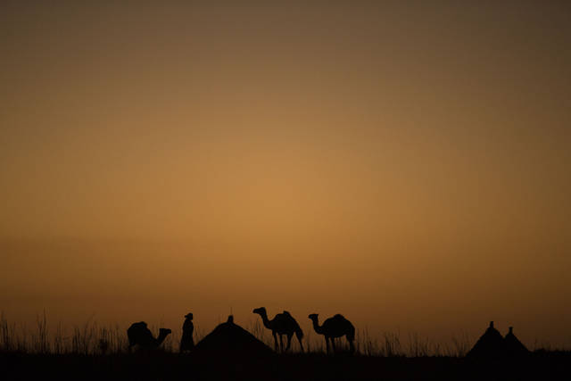 ADVANCE FOR SATURDAY DEC 22, 2012 In this Oct. 31, 2012 photo, a camel herder puts down his animals for the night, alongside living huts in a village in the Mao region of Chad. In this Sahel nation, childhood malnutrition and related mortality persist at alarming rates, despite the fact that most affected families live within a day's journey of internationally-funded nutrition clinics. One reason is that families, bound by local custom, choose instead to seek traditional treatments, which can lead to the very infections that kill their undernourished children.(AP Photo/Rebecca Blackwell)