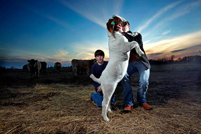 Carson Lough tries to control a goat during a portrait session at a barn in Hennessey, Okla., Thursday, Feb. 16, 2012. Photo by Sarah Phipps, The Oklahoman