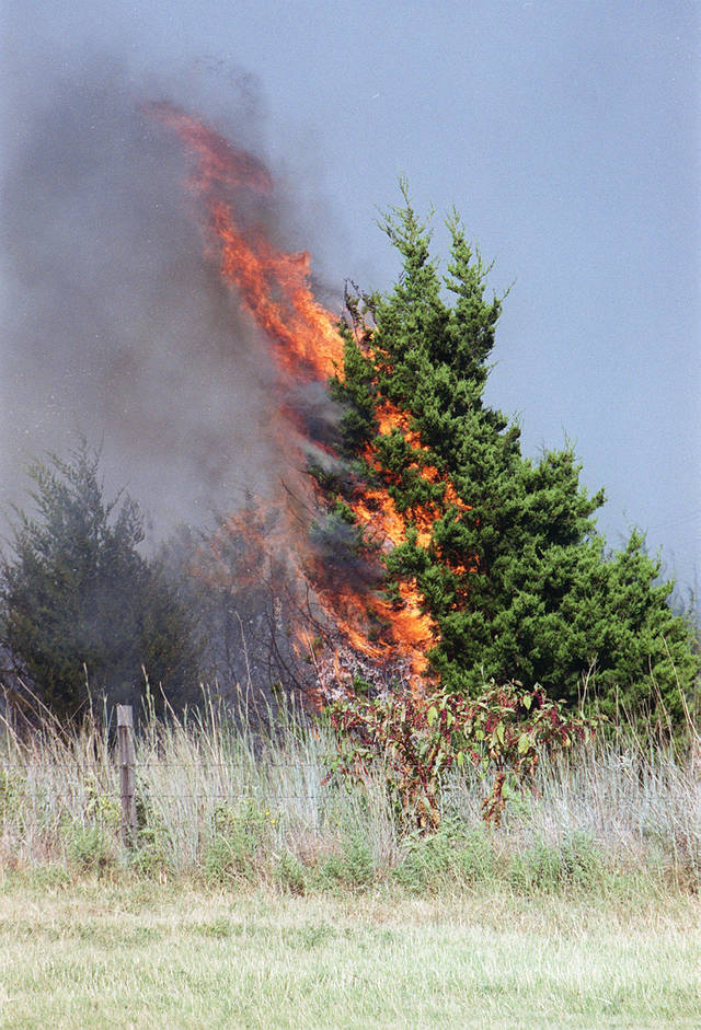 An Eastern red cedar tree is seen ablaze during a 2000 wildfire about 3 miles north of Binger. <strong>MILTON PADDLETY  NOT STAFF - THE OKLAHOMAN ARCHIVES</strong>