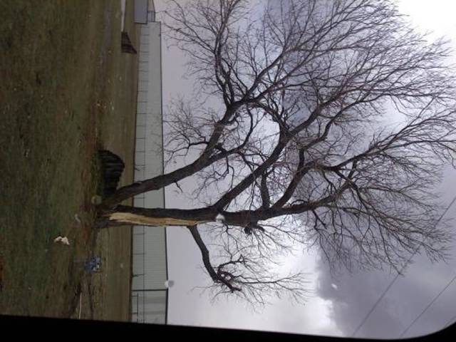 Tree hit by lightning about 4:30 pm just north of museum of osteology