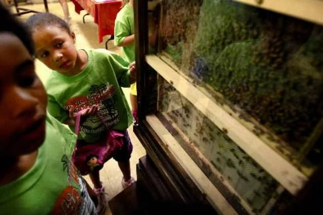 Lanaye Johnston, 6, checks out the bee exhibit at Martin Park Nature Center in Oklahoma City this June.