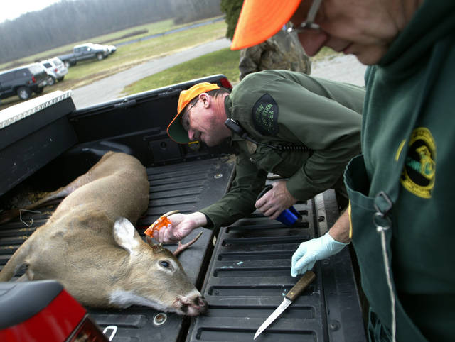 Michigan Conservation Officer Greg Patten inspects the tag as wildlife technician Bill Fuchs, right, waits to inspect a deer at the deer check station at the Muskegon State Game Area in northern Egelston Township, Mich. during the opening day of firearm deer season on Thursday, Nov. 15, 2012. Hunters have taken to the field across Michigan with the opening of the state's 16-day firearm deer season, but with limits for hunters across much of the southern part of the Lower Peninsula. Hunters in that part of the state can't kill as many deer as usual because of an insect-spread deer disease. Firearm deer hunting season started Thursday and runs through Nov. 30. (AP Photo/The Muskegon Chronicle,Ken Stevens) ALL LOCAL TV OUT; LOCAL TV INTERNET OUT
