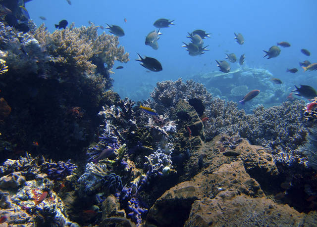 FILE - In this Thursday, April 30, 2009 file photo, coral reefs are seen in the waters of Tatawa Besar, Komodo islands, Indonesia. Coral gardens that were among Asia's most spectacular, teeming with colorful sea life just a few months ago, have been transformed into desolate gray moonscapes by fishermen who use explosives or cyanide to kill or stun their prey.(AP Photo/Dita Alangkara, File)