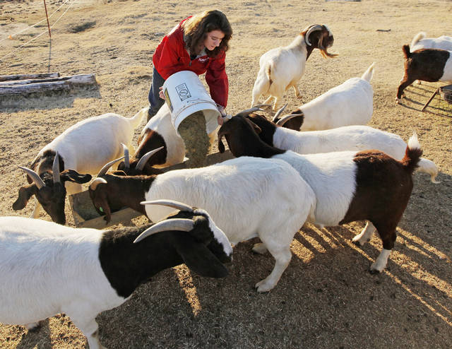 Taylor Muller, 15, feeds goats on her family's farm near Martha, Okla., Monday, Nov. 28, 2011. A proposal from the Department of Labor would affect what youth can do when working on farms. Photo by Nate Billings, The Oklahoman