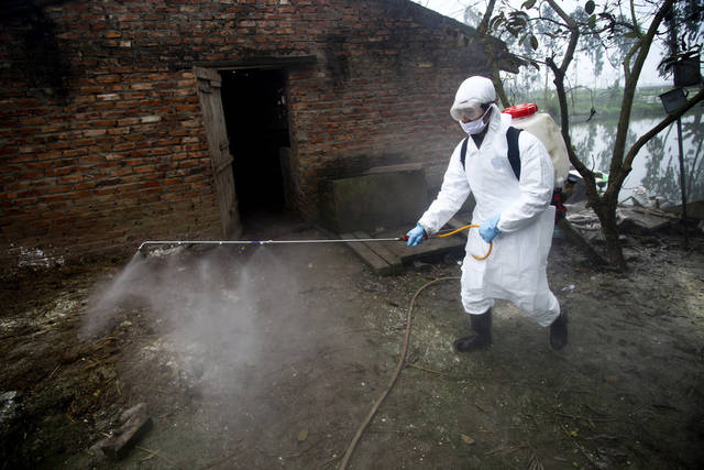 In this photo taken Tuesday, Feb. 14, 2012, a health worker wearing protective gear sprays disinfectant at a suspected outbreak of the H5N1 bird flu virus among ducks in Nhat Tan commune, Kim Bang district, Ha Nam province, Vietnam. Recent human deaths in Asia and Egypt are a reminder that the deadly H5N1 virus is still alive and dangerous. Vietnam is also grappling with a new strain that has outsmarted vaccines long used to help protect its poultry flocks. The H5N1 virus has killed 345 people worldwide since 2003, when it rampaged across large swaths of Asia decimating poultry stocks before later surfacing in parts of Africa, the Middle East and Europe. (AP Photo/Na Son Nguyen)
