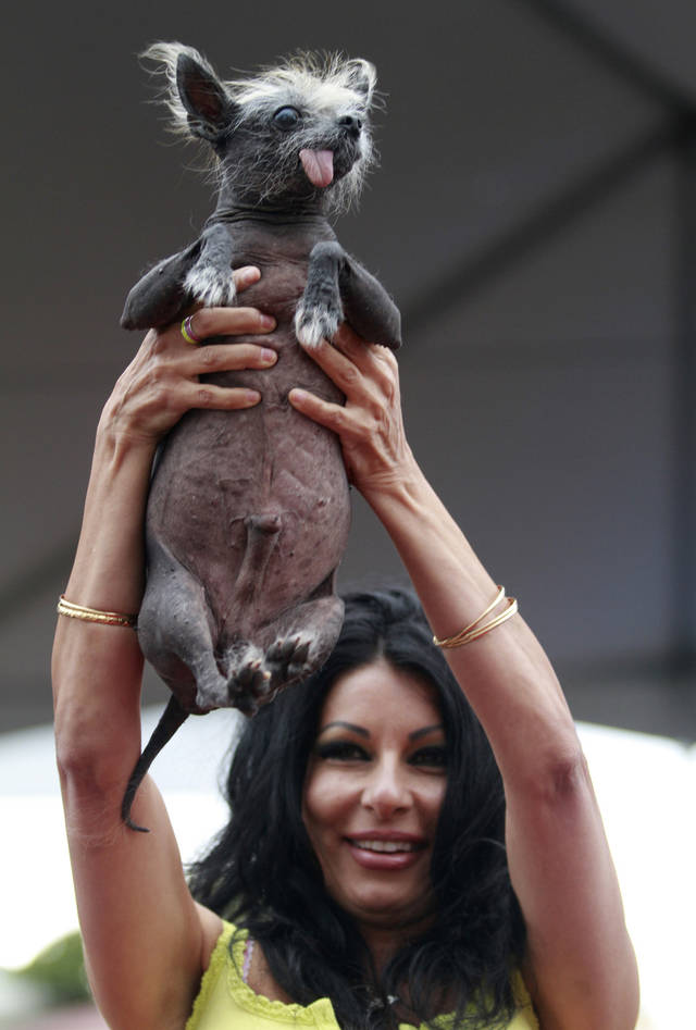 Suzanne Marta holds up her Chinese crested dog, Handsome Hector, during at the World's Ugliest Dog contest during the Sonoma-Marin Fair in Petaluma, California, on Friday, June 22, 2012. ((AP Photo/Beth Schlanker, The Press Democrat)