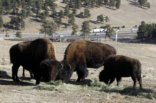 This photo taken on Dec. 7, 2012 shows bison feeding at the Buffalo Herd Overlook west of Denver. They're kept behind fences about 20 miles west of town on Interstate 70, where an overlook near Exit 254 offers great opportunities to photo the creatures with the Rocky Mountains on the horizon. Interstate 70 can be seen in the distance. (AP Photo/Ed Andrieski)