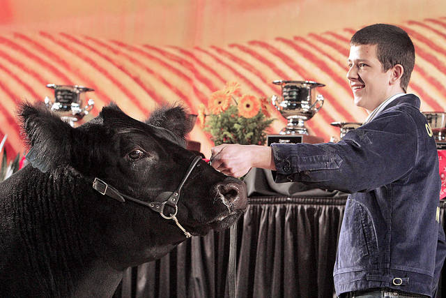 Newcastle senior Logan Davis shows off his Grand Championship Steer at the Oklahoma Youth Expo Sale of Champions on Monday. <strong>David McDaniel - The Oklahoman</strong>