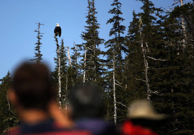 Hikers stop to look at a Bald eagle in  Ideal Cove in Southeast  Alaksa, Monday, June 4, 2012.  Photo by Sarah Phipps, The Oklahoman
