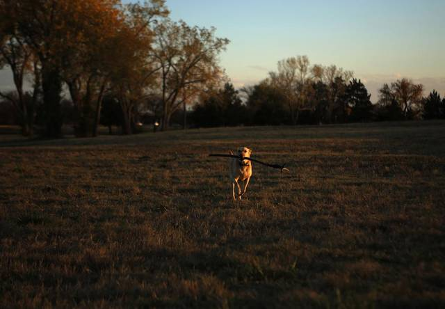 David Lamer and his dog, Gus, play fetch at a field near the Loyd Noble Center in Norman, Okla., Sunday, Nov. 11, 2012.  Photo by Garett Fisbeck, The Oklahoman
