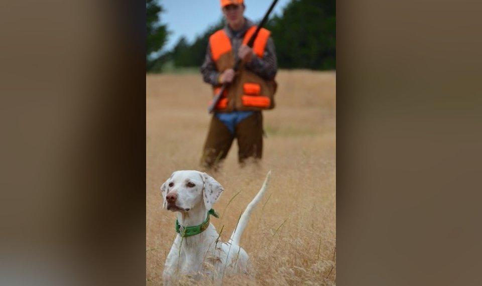 Bill to legalize hunting guides on public lands advances to