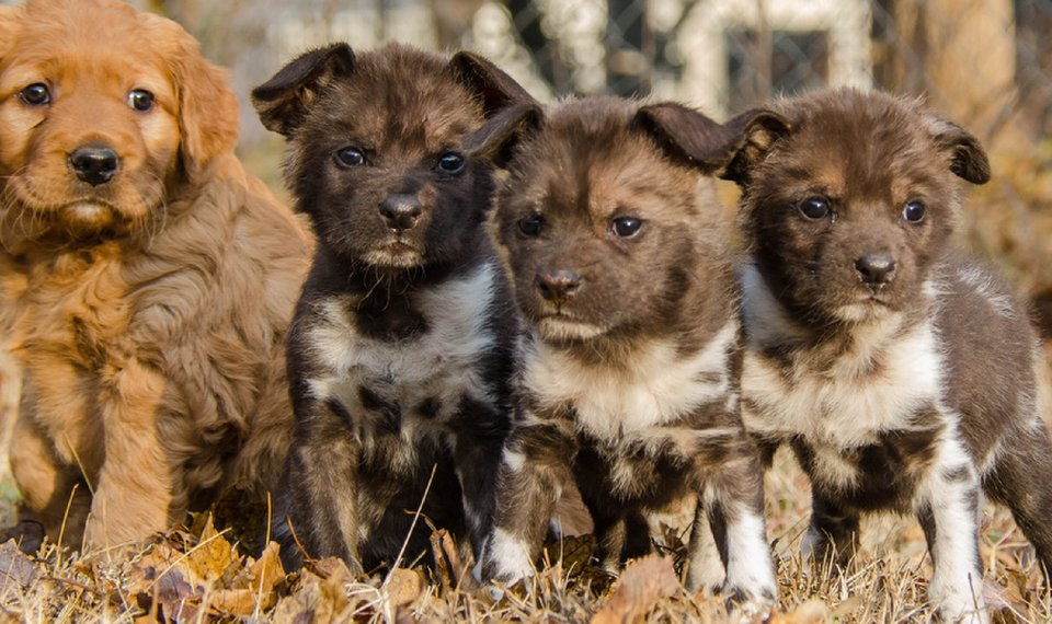 African Wild Dog Puppies Get Help Growing Up At Oklahoma City Zoo