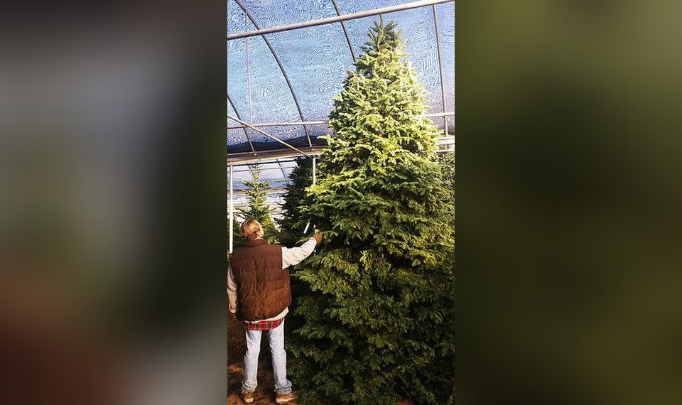 TLC\'s Tips on How to keep your Christmas Tree Fresh