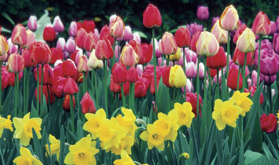 Fall is time to plant spring flowering bulbs mightylinksfo