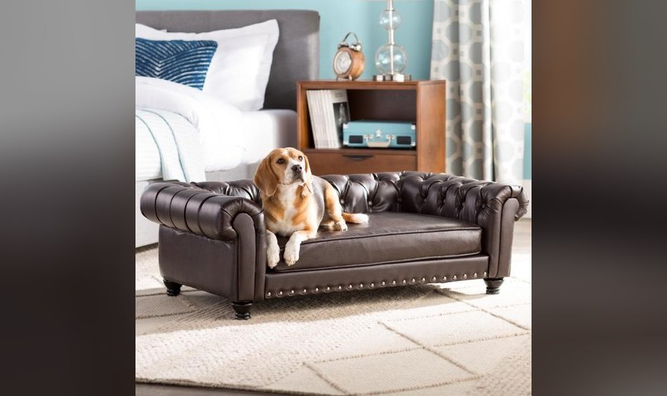 Furniture Designers Stylish Glamorous Products Help Make Pets Feel