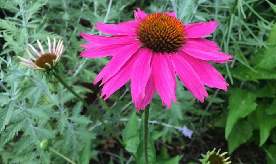 Exceptional Perennial Varieties Keep A Garden Fresh Interesting