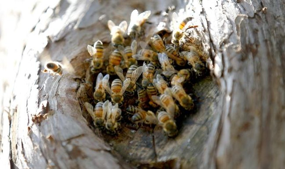 Bee tree damaged in storms still buzzing in new Will Rogers Gardens pollinator plot