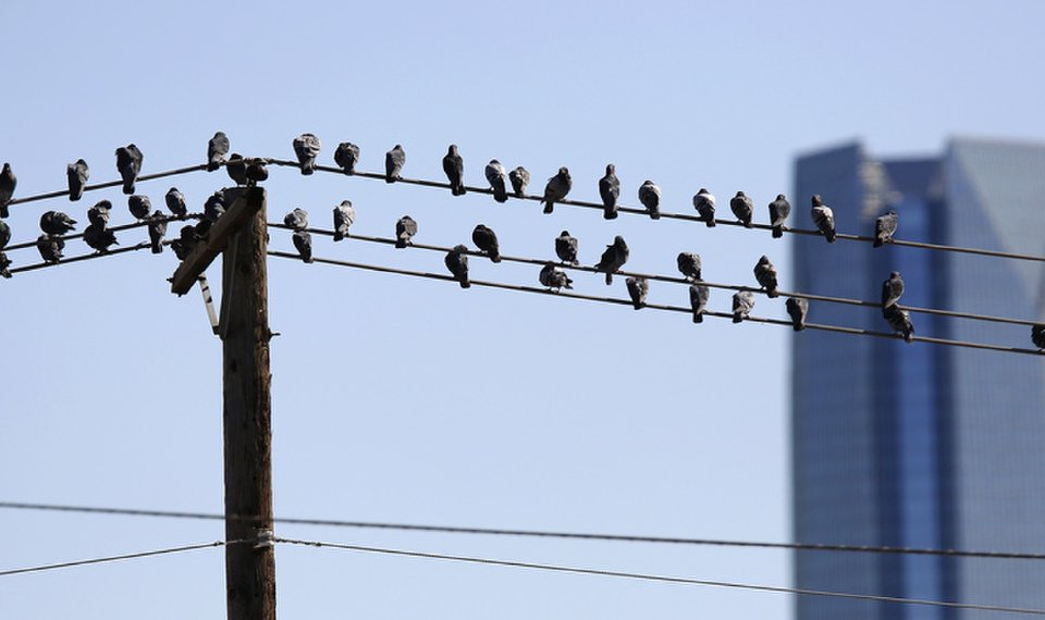 Nature You Birds On A Wire