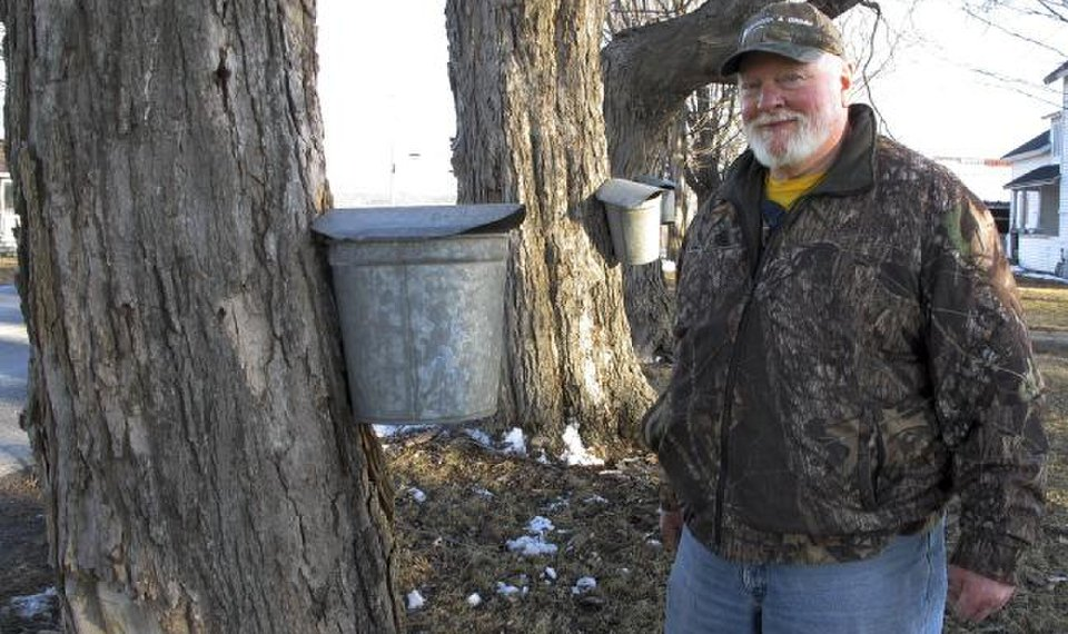 Sticky fingers: Syrup maker reports 140 sap buckets stolen