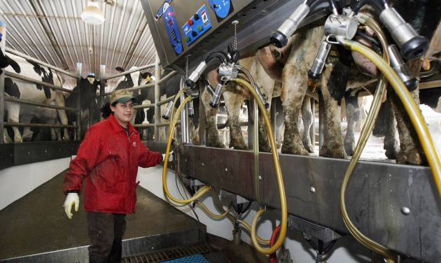 Hispanic man works at a dairy farm in Fairfield Vt. U.S dairy farmers struggling with low milk prices worry that President Donald Trump's 2017 talk of renegotiating the North American Free Trade Agreement