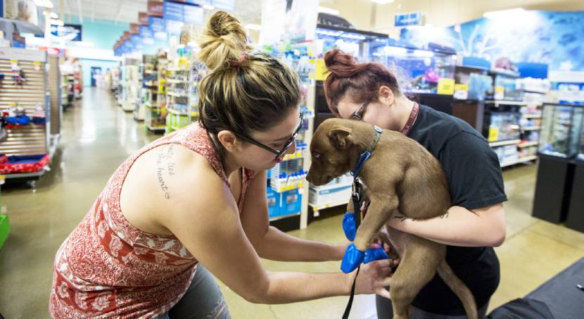 PetSmart helps dogs protect paws from summer heat