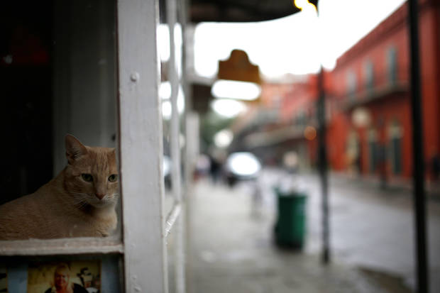 A cat sits in a shop window on the French Quarter.