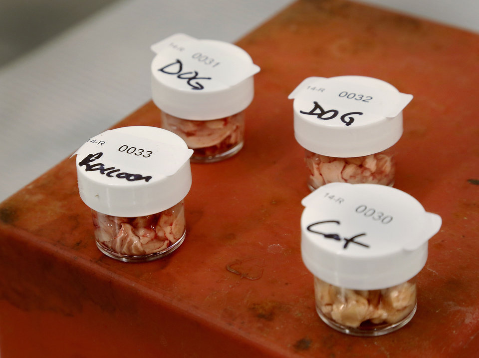 Photo - Brain samples from animals are stored in containers in the  on Thursday, Jan. 16, 2014; they will be tested for rabies.  The Oklahoma public health laboratory is located in the Oklahoma State Department of Health building in Oklahoma City. Public health officials say they are out of room to expand the lab and could lose lab accreditation if they aren't able to build a new lab soon. Losing accreditation would mean the lab's scientists could not perform thousands of tests for county health departments and hospitals across the state.   Photo by Jim Beckel, The Oklahoman